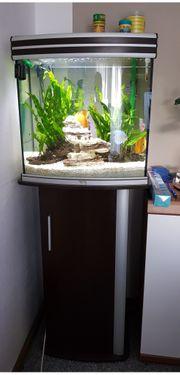 Aquarium aqualantis 140l panorama