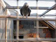 Vögel (Papageien)