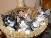 Suche kleines Kitten