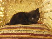 Kitten sucht liebevolles
