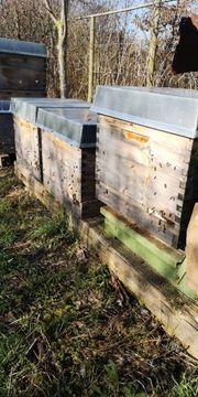 Bienenvölker Bienen Bienenvolk