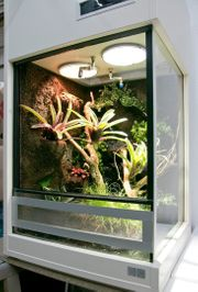 Terrarium für Pfeilgiftfrösche - Paludarium unser