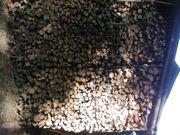 Brennholz Buche ca 4 m³