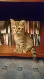 Leon, Kitten, Mix,