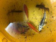 Teichfische wegen Auflösung heute für
