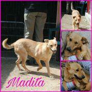 Madita möchte etwas