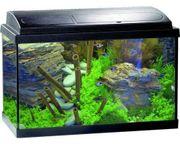 Suche Aquarium und