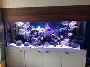 Aquarium 180x60x70 mit Besatz