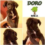 Doro - wunderschöner Welpe :
