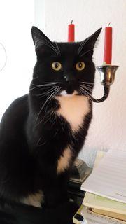 Katze vermisst, Mönchengladbach -
