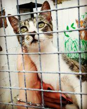 Pflegestellen für Katzen