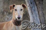 Möchten Sie Tintin eine Chance