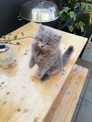 1 blh kitte