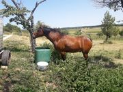 verkaufe pferd
