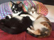 Kätzchen Thelma und Louise suchen