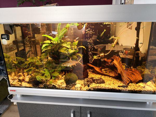 komplett eingerichtetes aquarium in chemnitz fische aquaristik kaufen und verkaufen ber. Black Bedroom Furniture Sets. Home Design Ideas
