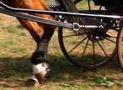 Kutschanspannung, DELVOS Pferdeschoner