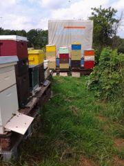 Bienenstand mit 14 Völkern auf