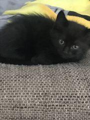 Babykatze sucht noch Familie