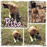 Rita sucht liebevolles