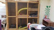 4 Frettchen mit großem Käfig