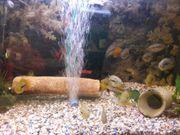 Regenbogen Fische