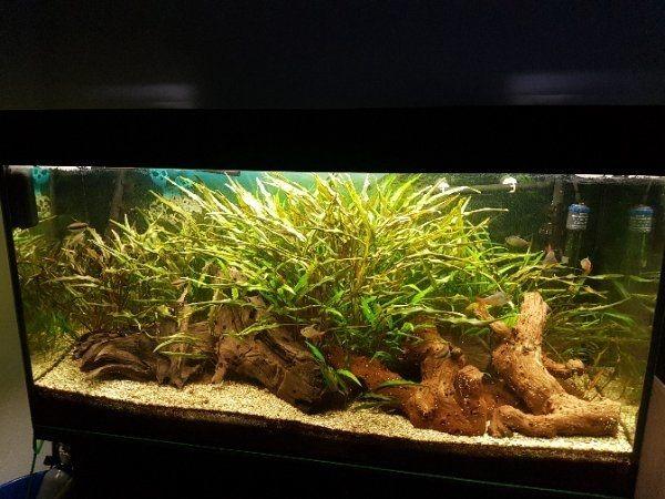 100x40x50 aquarium kleinanzeigen kaufen verkaufen bei deinetierwelt. Black Bedroom Furniture Sets. Home Design Ideas