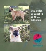 Chip 39375-lächelnder Hundemann
