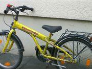 Pegasus Fahrrad 20