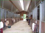 Pferdeboxen frei in