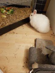 Angora-Mix Kaninchen
