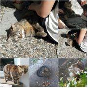 Katze abzugeben - 4-