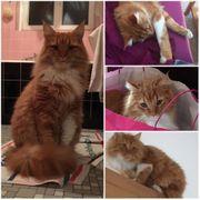 Katze Vermisst Hohenems