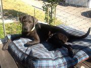 Suche Hundebetreuung Tierbetreuung für 17