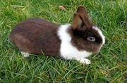 Kaninchen Damen suchen