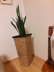 Rattanblumentopf inkl.Pflanze