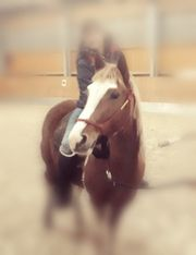 Lewitzer Pony Mix