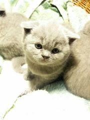 BKH Katzenbabys ab