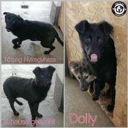 Süße Dolly sucht