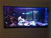 Aquarium-Auflösung Barsche