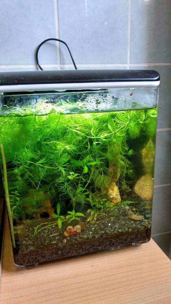 grau kleinanzeigen aquaristik kaufen verkaufen bei deinetierwelt. Black Bedroom Furniture Sets. Home Design Ideas