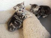Katzen Babys suchen ein neues