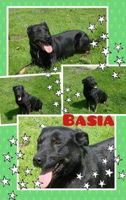 Basia unser Goldschatz