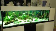 Aquarium 500 L