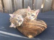 Katzen weiblich 6 Monate Freigänger