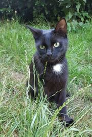 Unsere Katzenschönheit Daisy