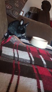 Kaninchen Dame Layla