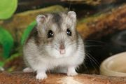hamster und Käfig