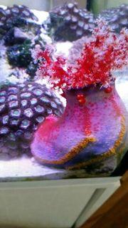 Meerwasser Seeapfel Seewasser Korallen