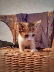 Süße Kätzchen suchen